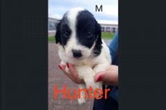 Hunter (m)