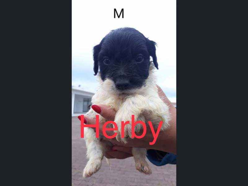 Herby (m)