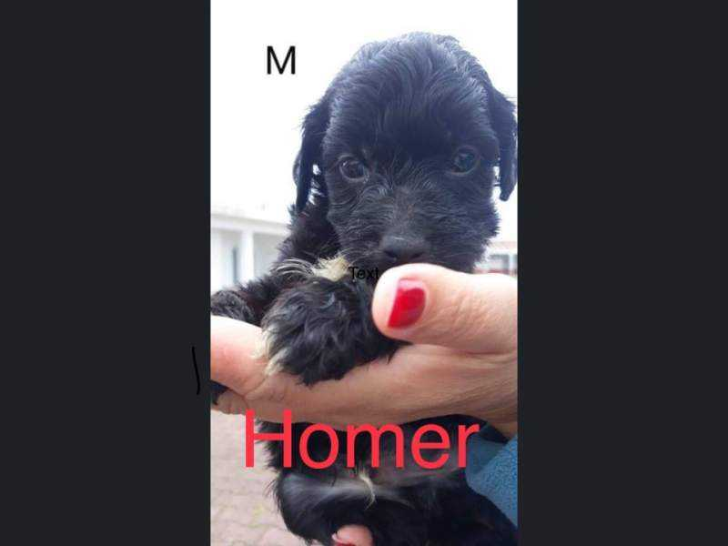 Homer (m)
