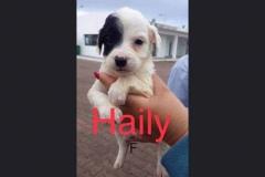 Haily (w)