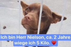 Herr Nilson (m)